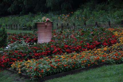 花壇のお花が綺麗