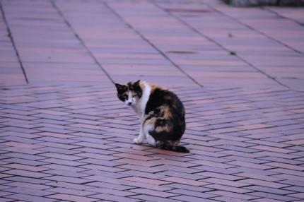 ネコちゃんと呼んだら振り向いてくれました