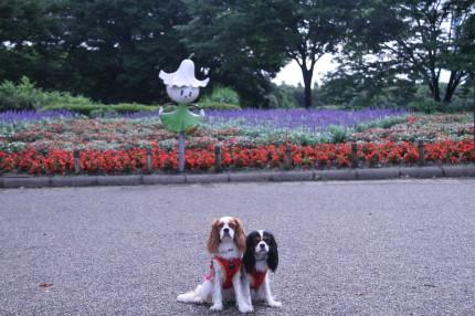 リリーちゃんとチャコ&エリー