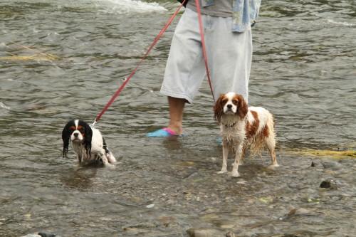 長瀞荒川で水遊び