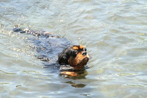 マリーちゃん、泳ぐ