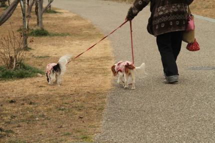 茅ヶ崎 里山公園でお散歩