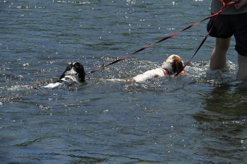チャコパパと一緒に川へ入るチャコ&エリー