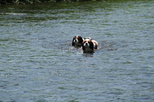 エリー、チャコ泳ぐ