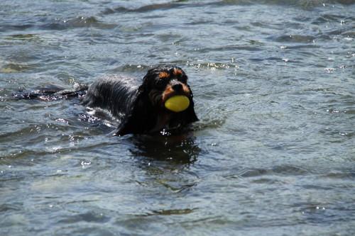 泳ぐのが上手なモニカちゃん