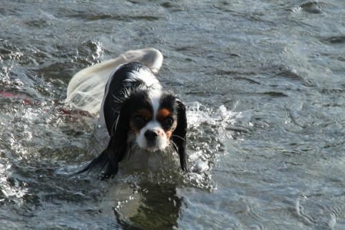 泳ぐエリー