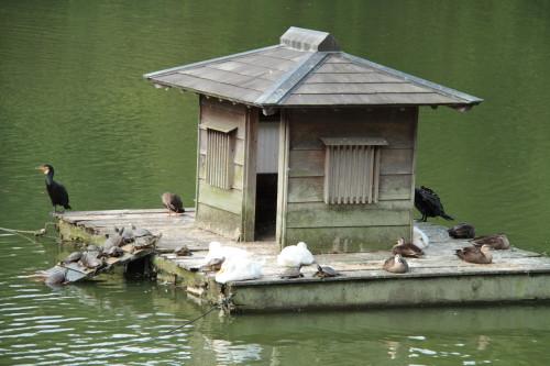池にある小屋で休憩中