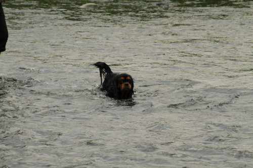 泳ぎが上手なマリーちゃん
