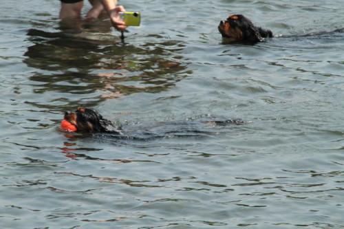 泳ぐマリーちゃん&モニカちゃん