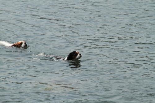 泳いでるチャコ&エリー