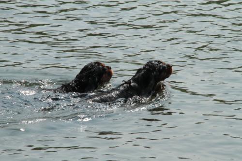 仲良く泳いでいるマリーちゃん&モニカちゃん