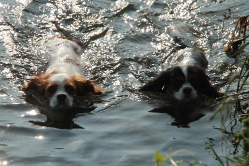 仲良く泳ぐチャコ&エリー