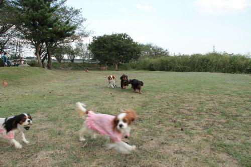 マリーちゃん、モニカちゃん、陽(はる)君走る