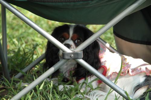 エリー、椅子の下の日陰で一休み