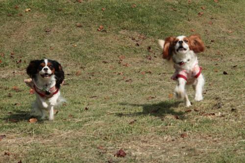 チャコ&エリー走る