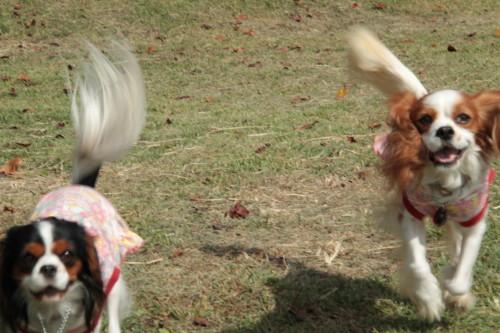 チャコ&エリー、走る