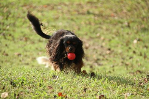 モニカちゃん、ボール遊び楽しそう♪♪