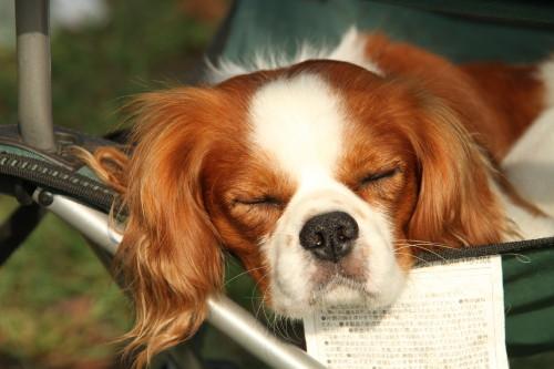 陽君疲れて寝ています