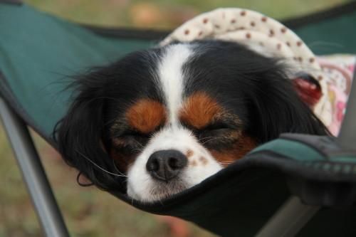 椅子の上で寝ているエリー
