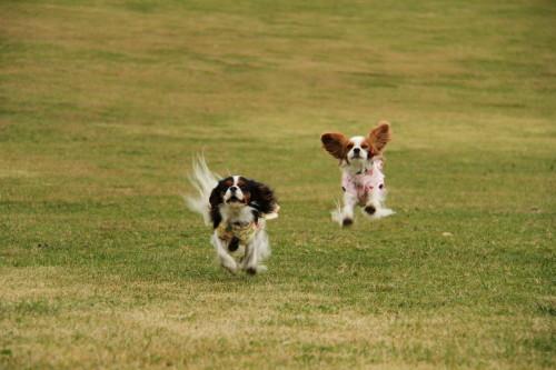 チャコ、エリー走る
