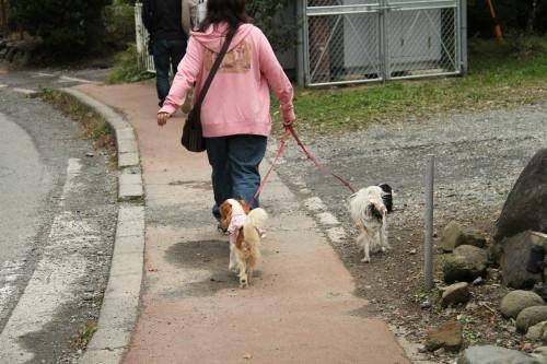 すすきを目指して歩く私とチャコ&エリー