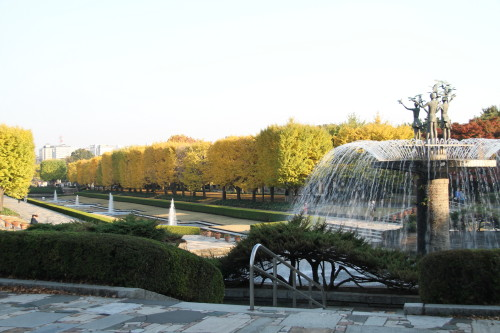 噴水と銀杏