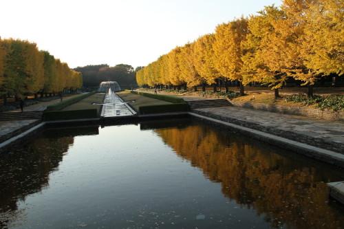 水面に映る銀杏並木