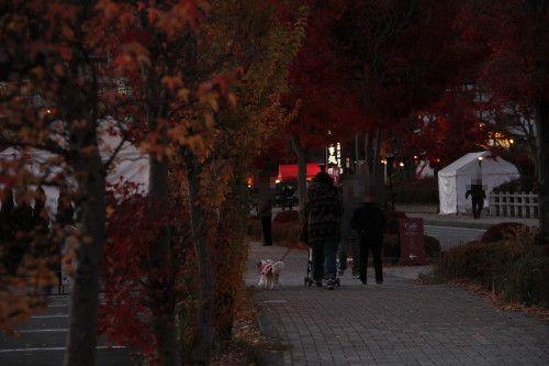 歩いている私とチャコ&エリー