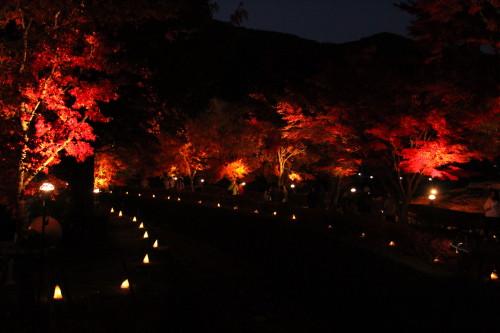 ライトアップしている紅葉