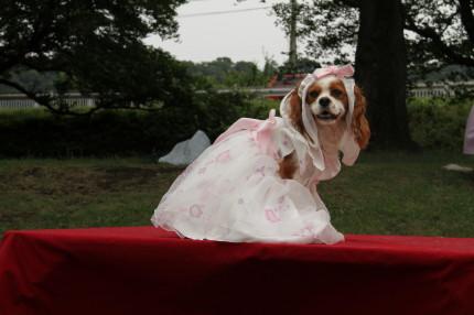 ナナママさんからドレスをお借りして。。。