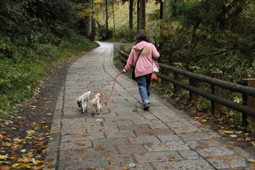 山道を歩く私とチャコ&エリー