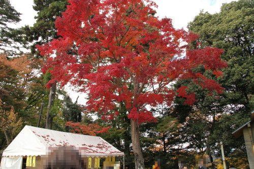 紅葉綺麗ですね