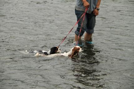 チャコパパに引っ張られて泳ぐチャコ&エリー
