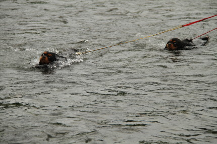 ナナちゃん、メイちゃん泳ぐ