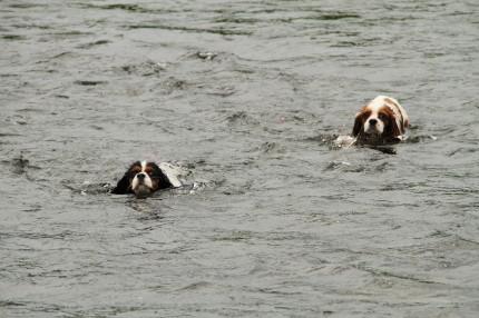 チャコ&エリーも泳ぐ