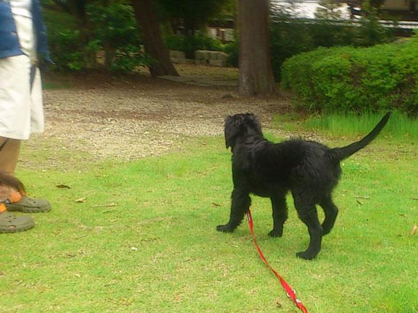 20110604お散歩2