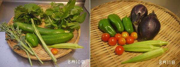 20110810-11収穫