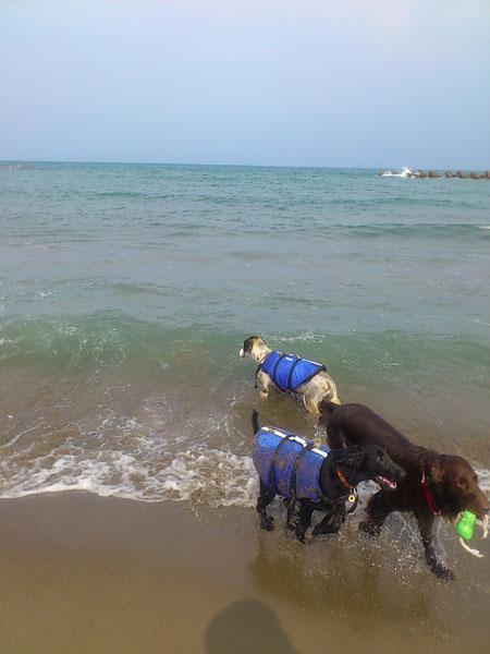 20110816海1