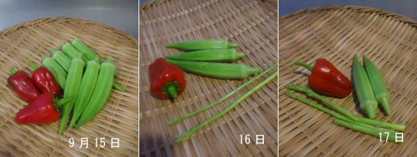 0915-17収穫