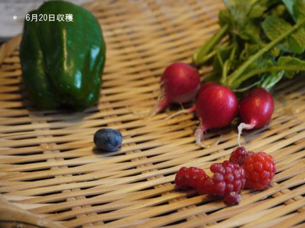 20120620収穫