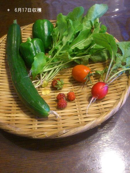 20120617収穫