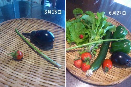 20120625-27収穫-1