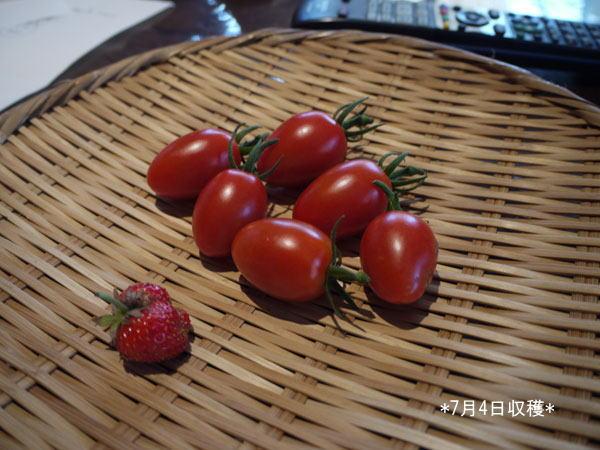 20120704収穫