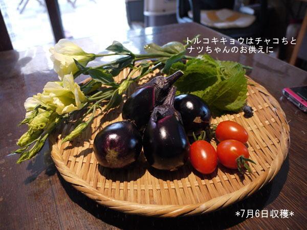 20120706収穫