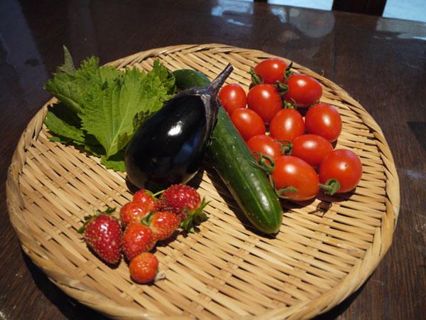 20120711収穫