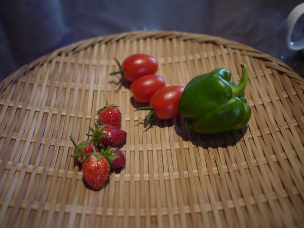 20120717収穫
