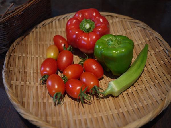 20120806収穫