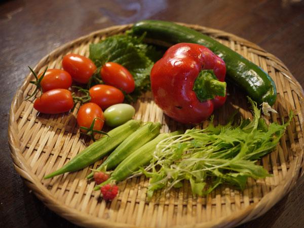 20120810収穫