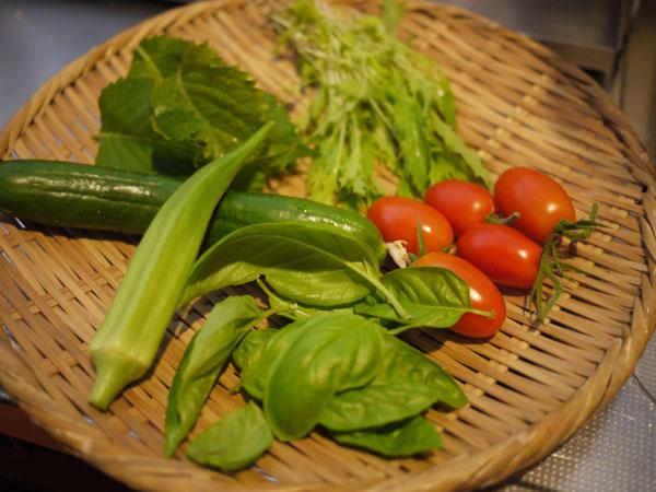 20120811収穫