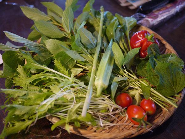 20120821収穫